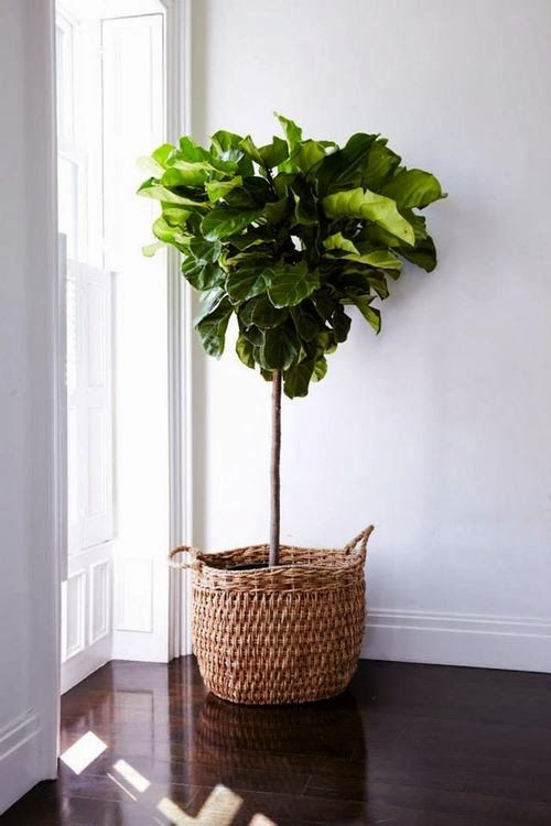 House your indoor plants in pots in beautiful modern designs.