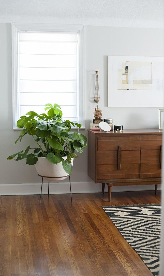 Spruce up your space with an indoor plant or two.